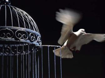 Pájaro saliendo de jaula